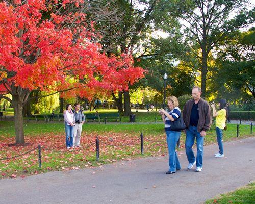 IMG_6930 - Version 22013-10-17-fall-colors-leaves-public-garden-© 2011 Penny Cherubino