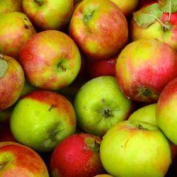 CHE_9540 - Version 22013-08-27-gravenstein-apples-© 2011 Penny Cherubino