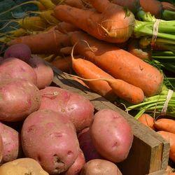 DSC_7492 - Version 22013-08-20-potatoes-carrots-© 2011 Penny Cherubino