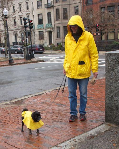 IMG_7085 - Version 22014-01-14-pug-puggy-jay-matching-raincoats-dog-master-© 2011 Penny Cherubino