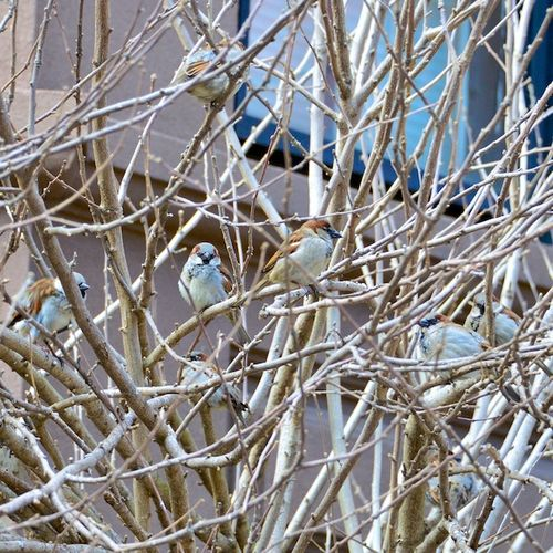 PC2_2345 - Version 22014-03-08-sparrows-marlborough-street-© 2011 Penny Cherubino