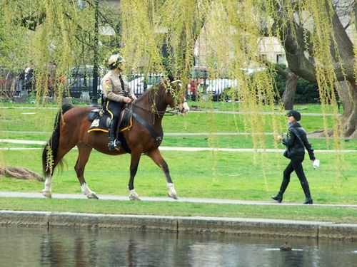 Pmc_9291 - version 32012-04-01mounted-ranger-walker-public-garden-© 2011 penny cherubino (1)