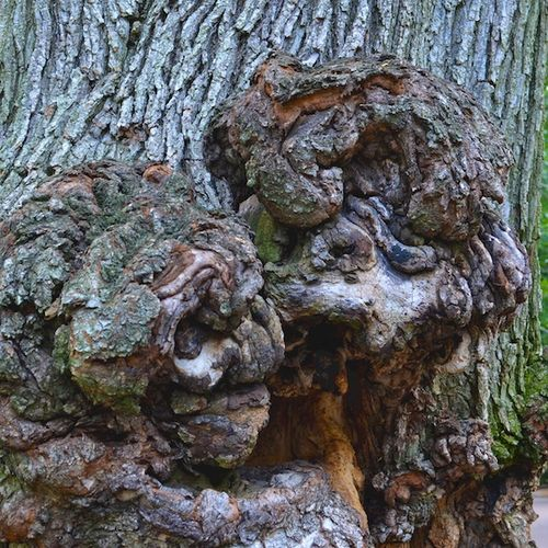 DSC_7838 - Version 22013-08-30-tree-burl-faces-© 2011 Penny Cherubino
