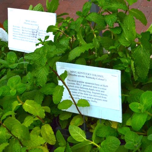 DSC_2077 - Version 22014-05-13-mints-herb-lycium-copley-square-farmer-market-© 2011 Penny Cherubino