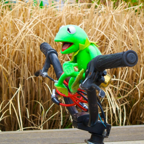IMG_7380 - Version 22014-04-26kermit, provincetown, being green, okay here, best use of bike,© 2011 Penny Cherubino