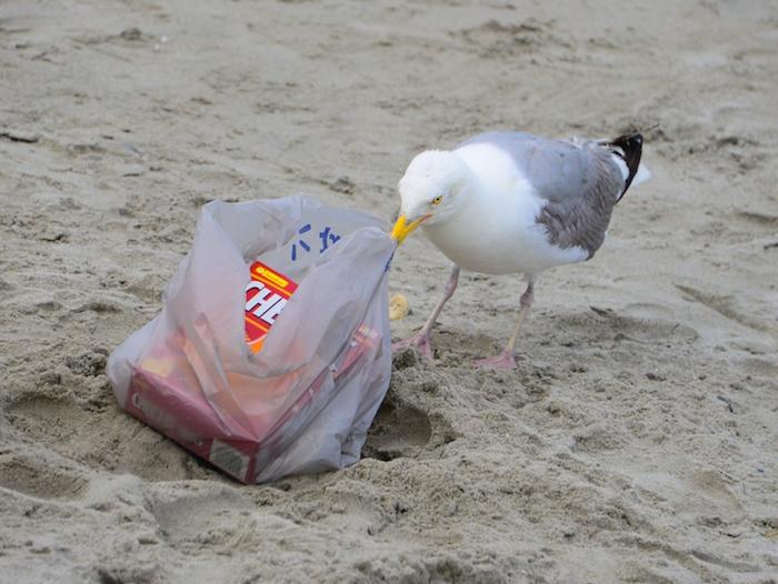 CHE_3913 - Version 22014-07-24-seagull-thief-© 2011 Penny Cherubino