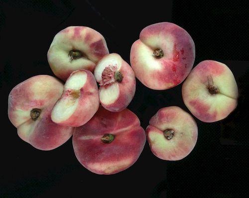IMG_0920 - Version 22014-08-23-saturn-peaches-foppama's-farm-ripe-© 2011 Penny Cherubino