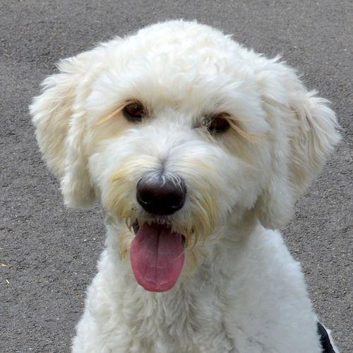 DSC_3618 - Version 22014-08-23sidney-dog-commonwealth Avenue Mall-© 2011 Penny Cherubino