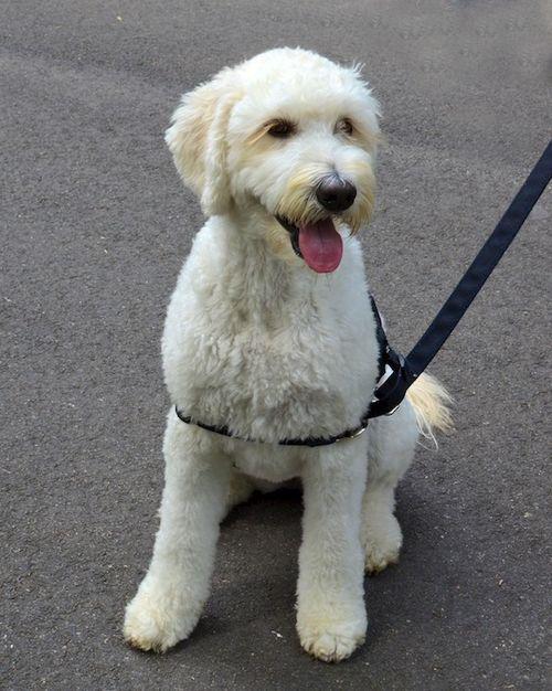 DSC_3619 - Version 22014-08-23sidney-dog-commonwealth Avenue Mall-© 2011 Penny Cherubino