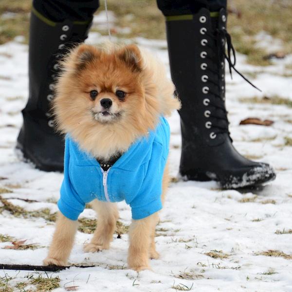 PC2_1874 - Version 22014-01-25-teddy-sunday-dog-© 2011 Penny Cherubino