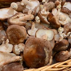 PC2_3508 - Version 22014-05-13-shitake-mushrooms-ri mushroom company-copley-square-farmer-market-© 2011 Penny Cherubino