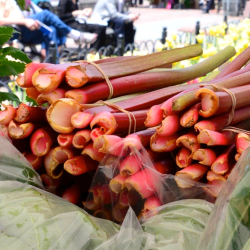 PC2_3534 - Version 22014-05-20-rhubarb-Foppema's Farm-copley-square-farmer-market-© 2011 Penny Cherubino