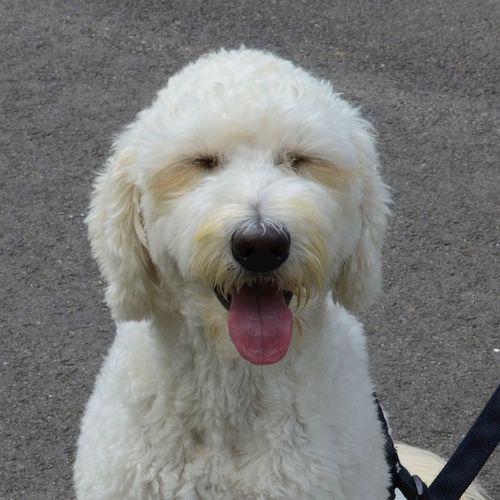 DSC_3622 - Version 22014-08-23sidney-dog-commonwealth Avenue Mall-© 2011 Penny Cherubino