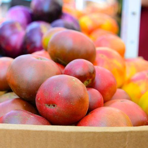 CHE_4134 - Version 22014-08-05august-tomatoes- © 2011 Penny Cherubino