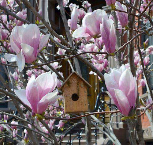 DSC_5567 - Version 22015-04-25-back-bay-garden-birdhouse-magnolias-© 2014 Penny Cherubino