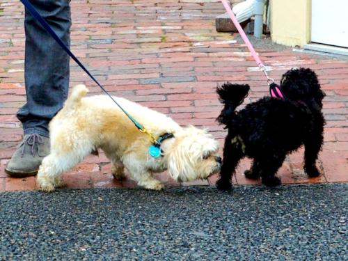 PC2_3185 - Version 22014-04-27-dog-greeting-sniffing-city-paws-travel-alerts-© 2014 Penny Cherubino copy