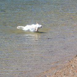 CHE_7457 - Version 22015-05-13-wet-dogs-polite-provincetown-© 2014 Penny Cherubino