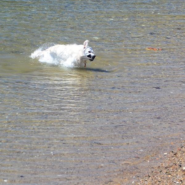 CHE_7458 - Version 22015-05-13-wet-dogs-polite-provincetown-© 2014 Penny Cherubino