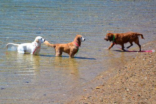 CHE_7492 - Version 22015-05-13-wet-dogs-polite-provincetown-© 2014 Penny Cherubino