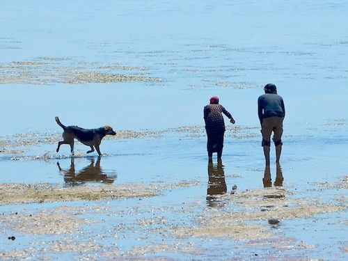CHE_7363 - Version 32015-05-11-ldog-off-leash-beach-© 2014 Penny Cherubino