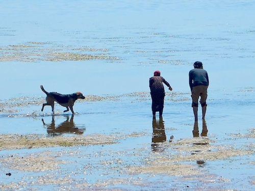 CHE_7363 - Version 32015-05-11-ldog-off-leash-beach-© 2014 Penny Cherubino