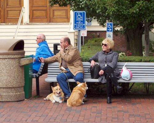IMG_8650 - Version 22015-10-05-provincetown-dogs-corgies-© 2014 Penny Cherubino