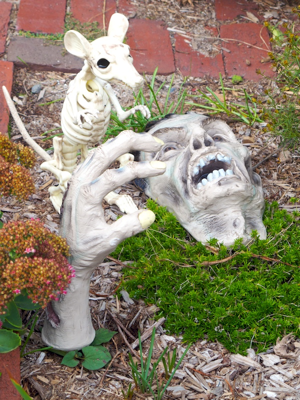 IMG_8641 - Version 22015-10-05Halloween-garden- provinctown-© 2014 Penny Cherubino