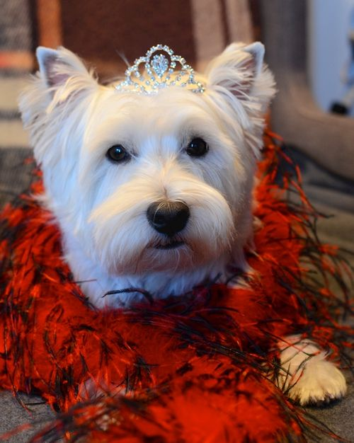 DSC_7004 - Version 22015-10-23Halloween-duchess-poppy-© 2014 Penny Cherubino