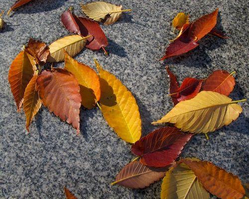 IMG_7740 - Version 22014-11-14sarmento-foliage- November-15th-boston-© 2014 Penny Cherubino