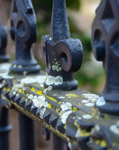 CHE_6501 - Version 22015-04-02-spring-boston-lichen-public-garden-© 2014 Penny Cherubino