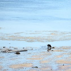 CHE_7353 - Version 22015-05-11-beach-dog-provincetown-harbor-© 2014 Penny Cherubino