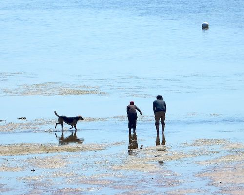 CHE_7363 - Version 22015-05-11beach-calling-dog-provincetown-harbor-© 2014 Penny Cherubino