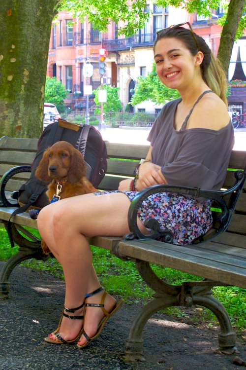 IMG_1407 - Version 22015-06-22-theo-irish-setter-puppy-© 2014 Penny Cherubino