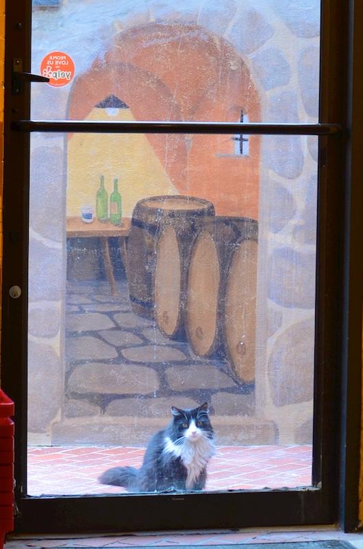 DSC_6521 - Version 22015-07-29-sophia-cat-bauer-wines-© 2014 Penny Cherubino