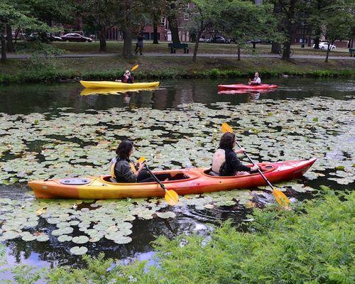 CHE_8466 - Version 22015-08-09-Esplande-canoeway-kayaks-storrow-drive-© 2014 Penny Cherubino