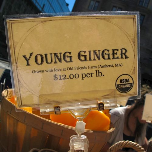 IMG_8521 - Version 22015-09-15young-ginger-local-old-freinds-farm© 2014 Penny Cherubino
