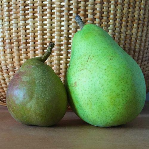 IMG_3779 2 pears - Version 22015-09-19pears-forelle-anjou-© 2014 Penny Cherubino