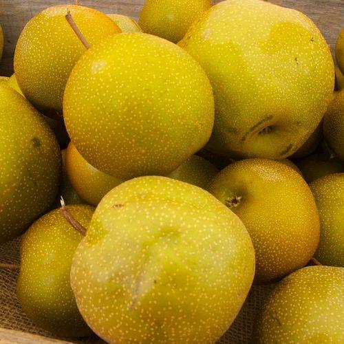IMG_8550 - Version 22015-09-22-asian-pears-foppama-farm© 2014 Penny Cherubino
