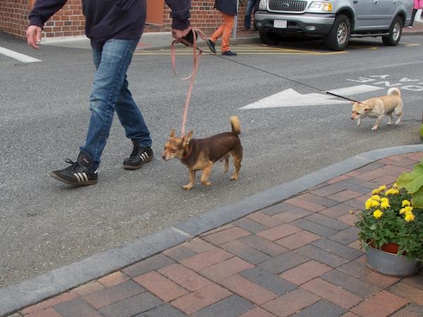 IMG_8659 - Version 22015-10-05-provincetown-dogs-© 2014 Penny Cherubino