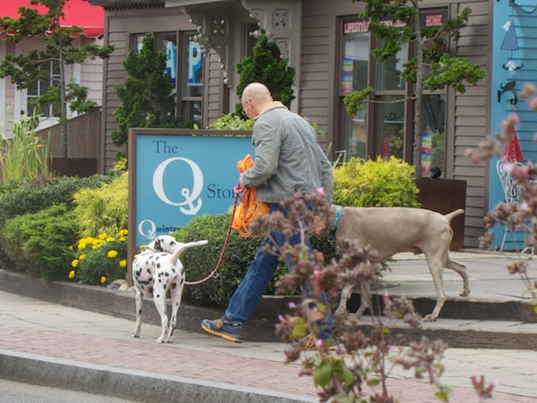 IMG_8662 - Version 22015-10-05-provincetown-dogs-© 2014 Penny Cherubino