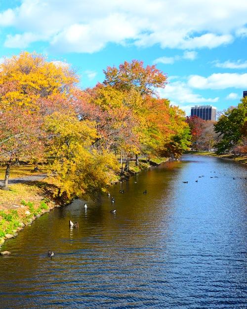CHE_9389 - Version 22015-10-30esplanade-canoeway-canada-geese-foliage-© 2014 Penny Cherubino