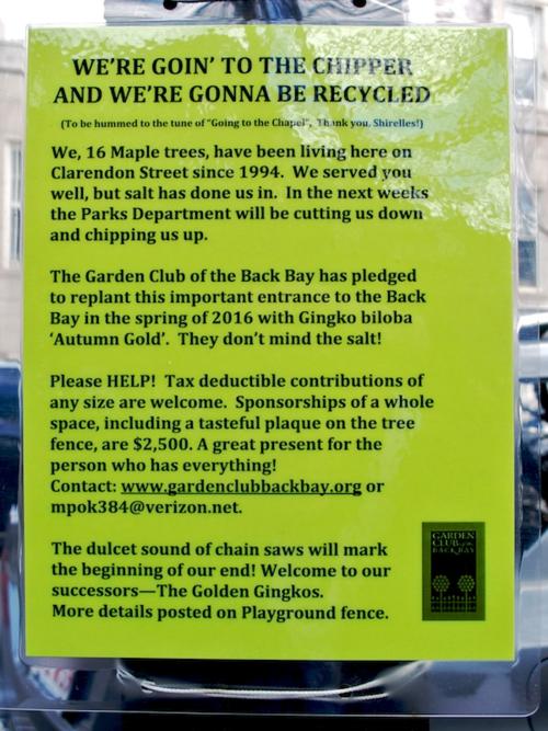 IMG_8933 - Version 22015-11-26-clarendon-street-tree-project-garden-club-back-bay-© 2014 Penny Cherubino
