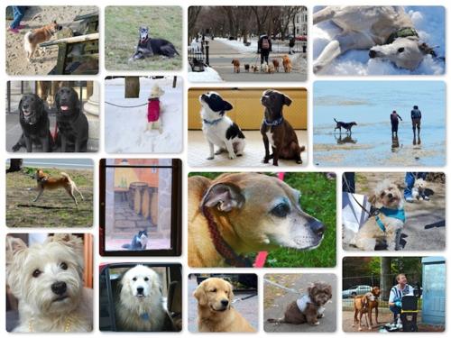 2015 Sunday dogs copy