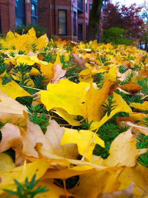 IMG_7743 - Version 22014-11-14boston-November-foliage-back-bay-© 2014 Penny Cherubino