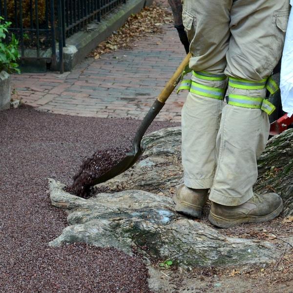 DSC_3910 - Version 22014-09-10flexi-pave-covering-tree-roots-sidewalk-© 2014 Penny Cherubino