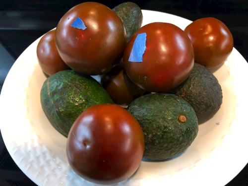 IMG_1557 - Version 22015-02-14-tomatoes-ripe-avacados-blue-tape-tip-© 2014 Penny Cherubino