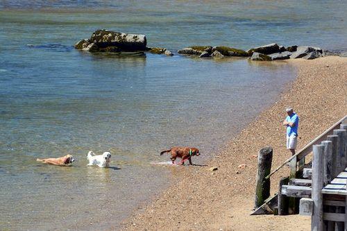 CHE_7438 - Version 22015-05-13-wet-dogs-polite-provincetown-© 2014 Penny Cherubino