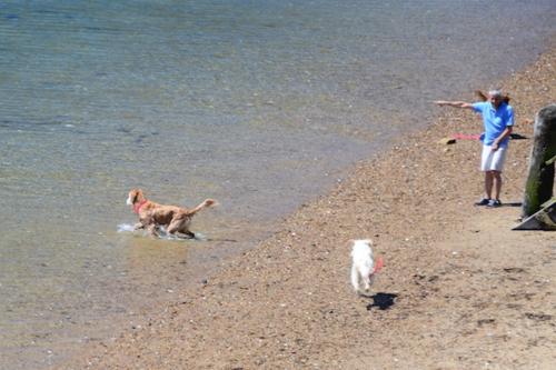 CHE_7444 - Version 22015-05-13-wet-dogs-polite-provincetown-© 2014 Penny Cherubino