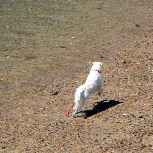 CHE_7442 - Version 22015-05-13-wet-dogs-polite-provincetown-© 2014 Penny Cherubino