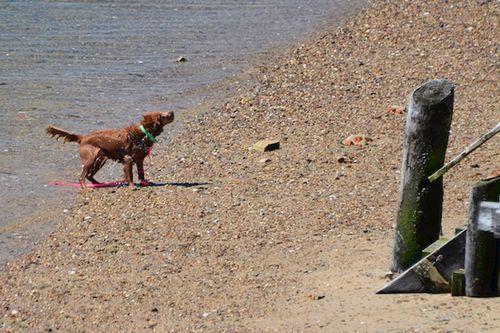 CHE_7475 - Version 22015-05-13-wet-dogs-polite-provincetown-© 2014 Penny Cherubino